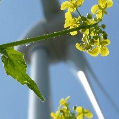 Stadtwerke – Energieversorger heute